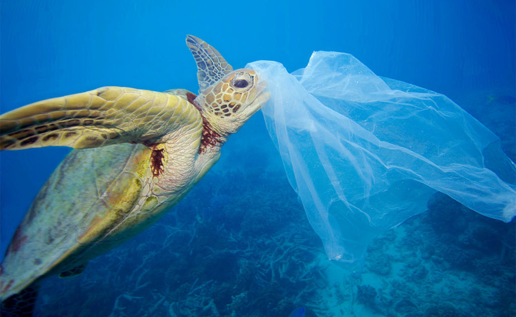 Plastica, inquinamento, oceani | PRINGO - Agenzia di Comunicazione Web e Stampa