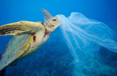 Plastica, inquinamento, oceani   PRINGO - Agenzia di Comunicazione Web e Stampa